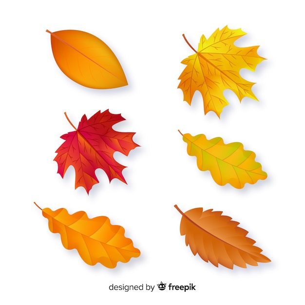 Autumn leaves collection flat design Free Vector
