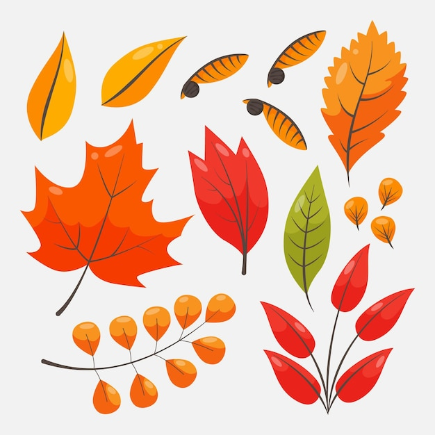 Autumn leaves collection theme Free Vector