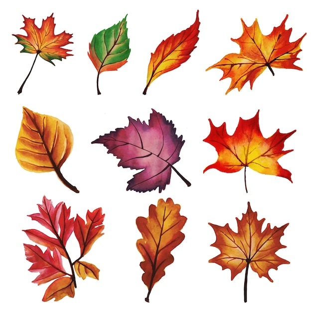 autumn leaves collection vector free download