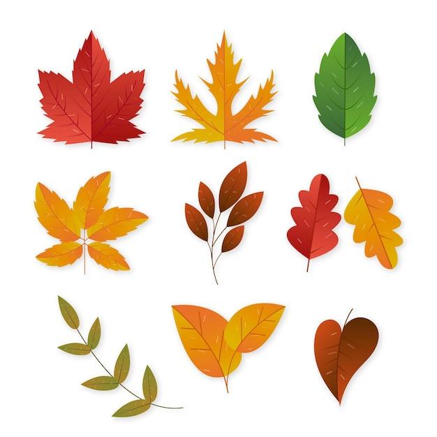 Коллекция осенних листьев Бесплатные векторы