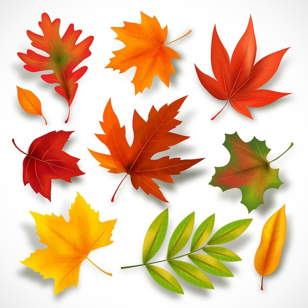 Autumn leaves collection Free Vector
