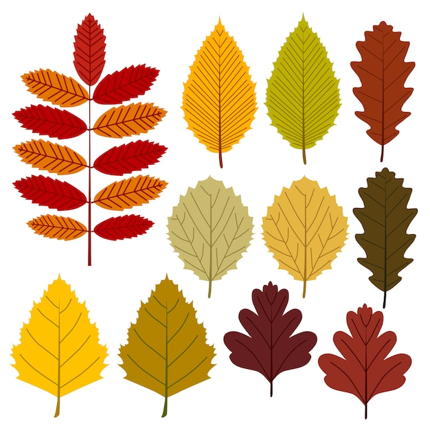 Premium Vector Autumn Leaves Flat Style Collection Icon Set