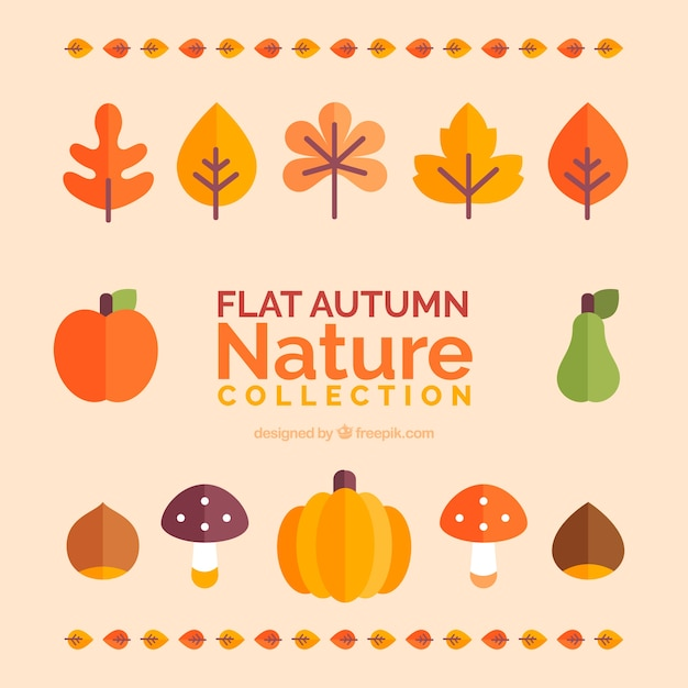 Autumn leaves and fruits collection Free Vector