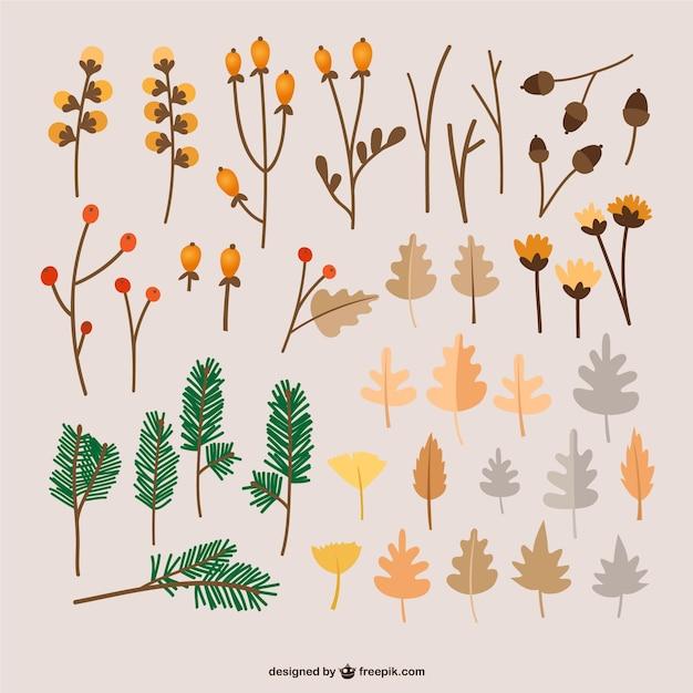Autumn leaves illustrations