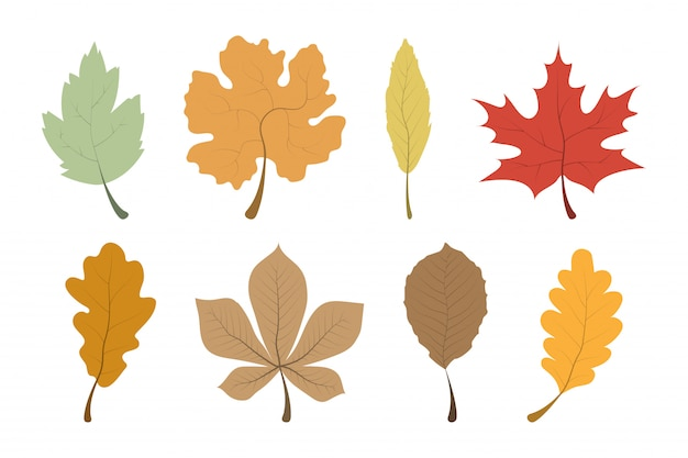Autumn leaves. leaves collection. template autumn leaves in a row. Premium Vector