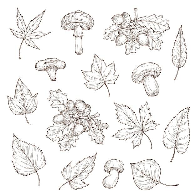 Эскиз осенних листьев, грибов и желудей Premium векторы