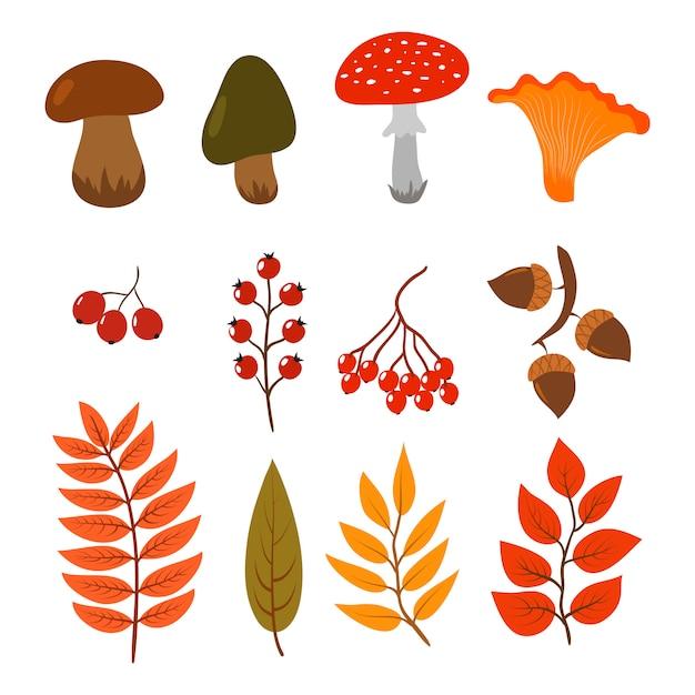 Листья осени, грибы и ягоды изолированные на белизне. иллюстрация элементов стиля мультяшный лес осень Premium векторы