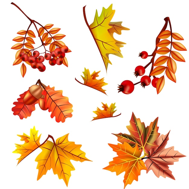Autumn leaves set with berry and oak Premium Vector