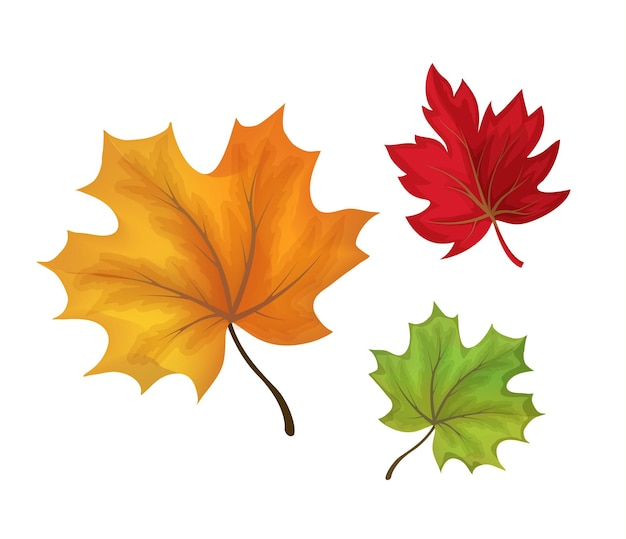 紅葉セット。赤、オレンジ、緑の色の森の花のオブジェクト。 Premiumベクター
