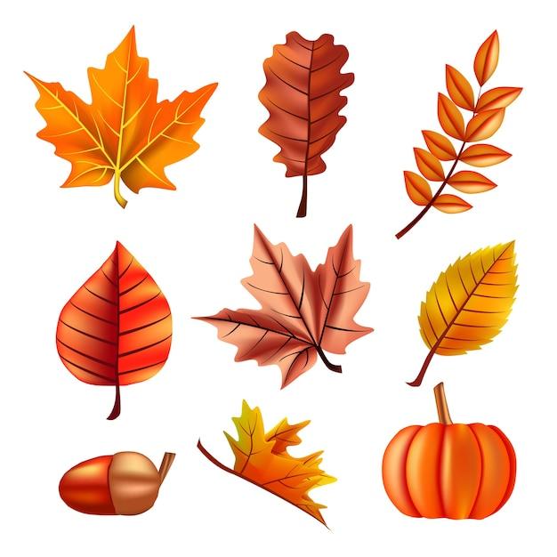 Autumn set with leaves, oak and pumpkin Premium Vector