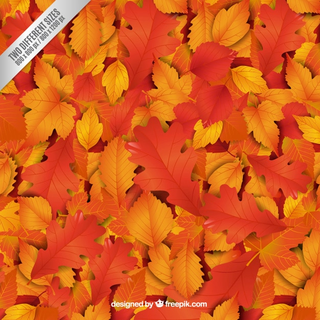 Autumnal leaves background Free Vector