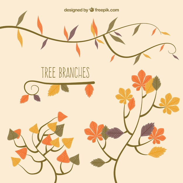 Autumnal tree branches