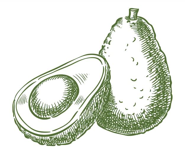 Авокадо вектор эскиз рука рисунок Premium векторы