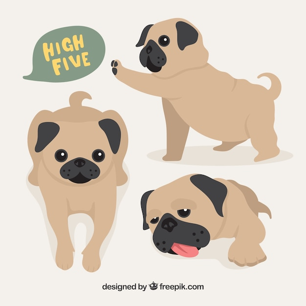 Baby pug dogs Free Vector