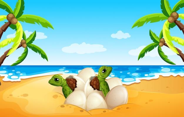 Baby sea turtle hatch on the beach Premium Vector