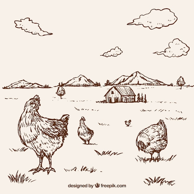 Background of hand-drawn hens on a farm Free Vector