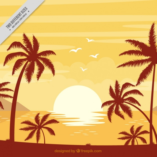 Background of beach with palm trees at\ sunset