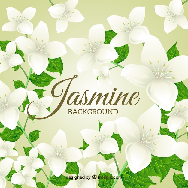 Background Of Beautiful Jasmine With Leaves Vector