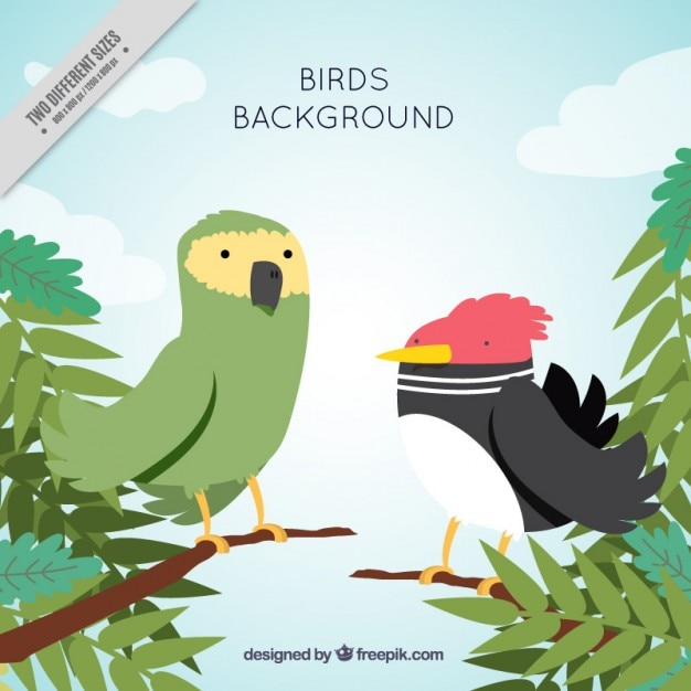 Background of exotic birds in the jungle