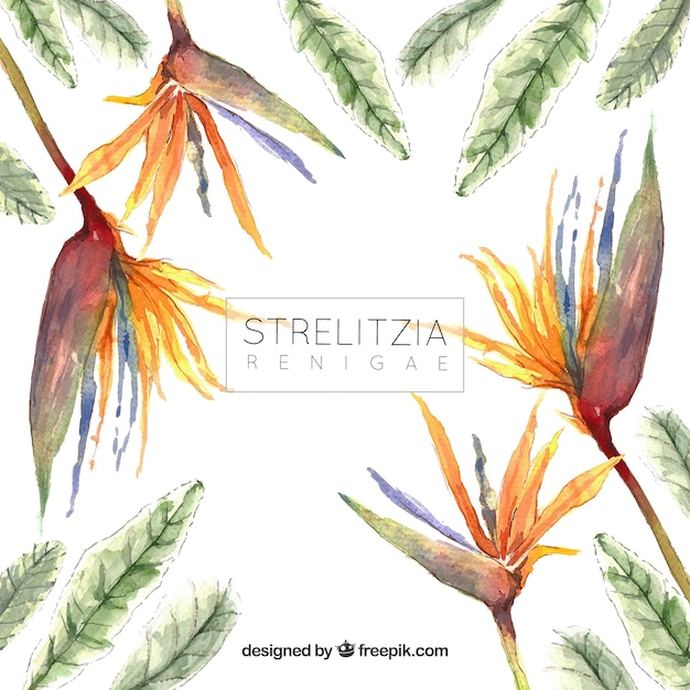 Background of exotic watercolor flowers