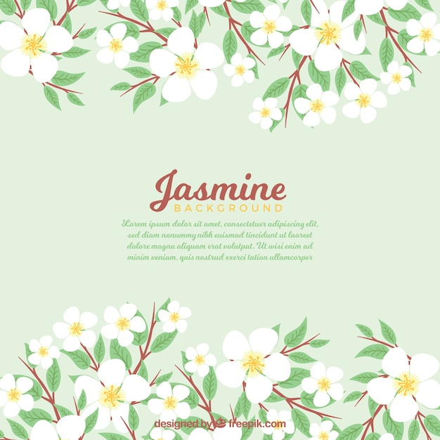 Jasmine Flower Vectors, Photos And PSD Files