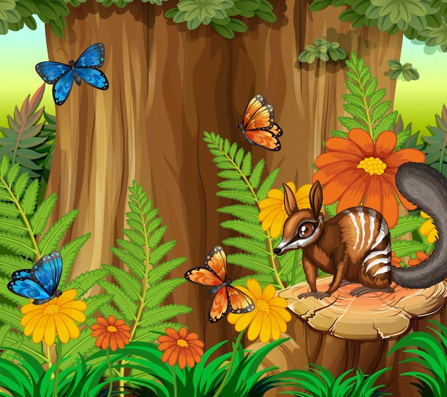 Background scene with numbat and butterfly in forest Premium Vector