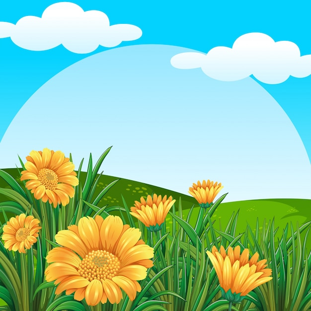 Background scene with yellow flowers in\ field