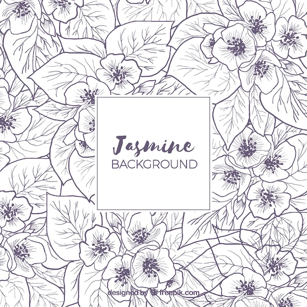 Background with sketches of jasmine Free Vector