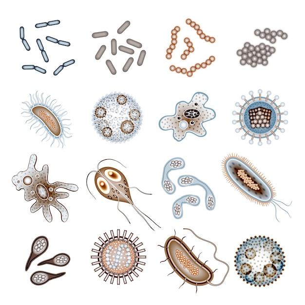 Bacteria and virus cells Premium Vector