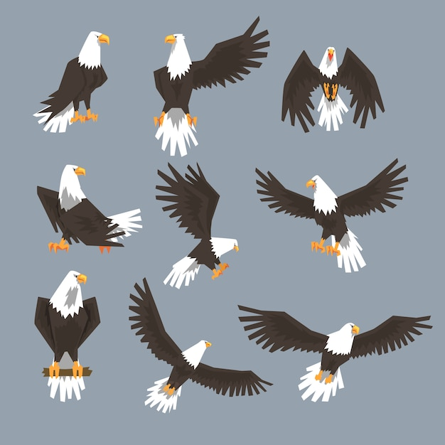 Bald eagle image set on grey background Premium Vector