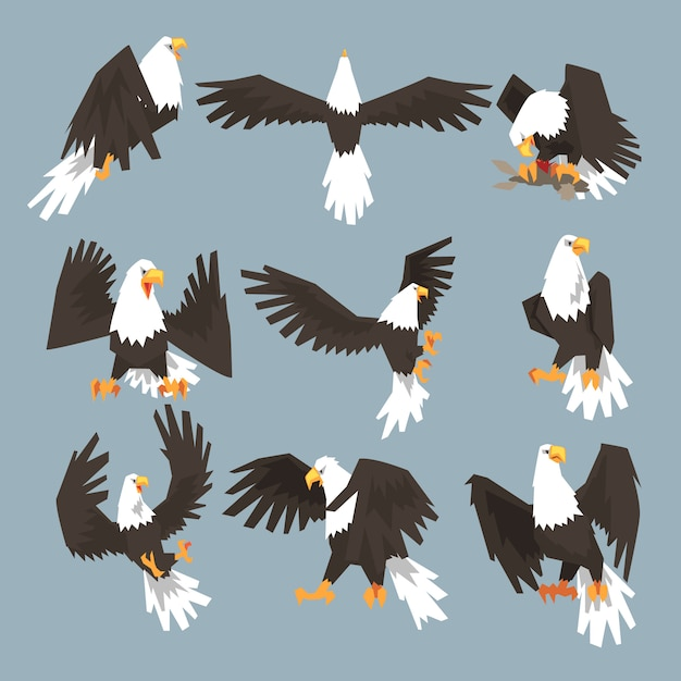 Bald eagle an image set hunting on gray background Premium Vector