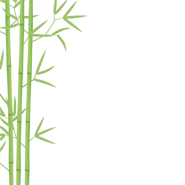 Bamboo background illustration. bamboos or bambusa plant Premium Vector