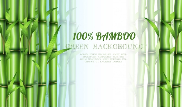 Bamboo eco . with copyspace for your text. Premium Vector