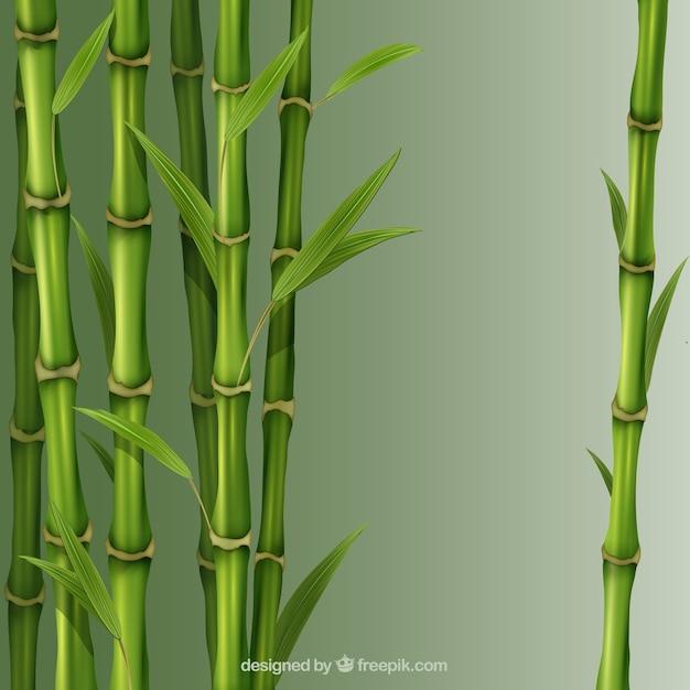 Bamboo reeds Free Vector