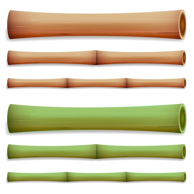 Bamboo stems Premium Vector