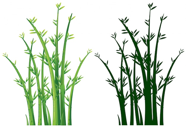 Bamboo trees in green Free Vector