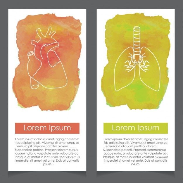 Banners about human anatomy, heart and lung Free Vector