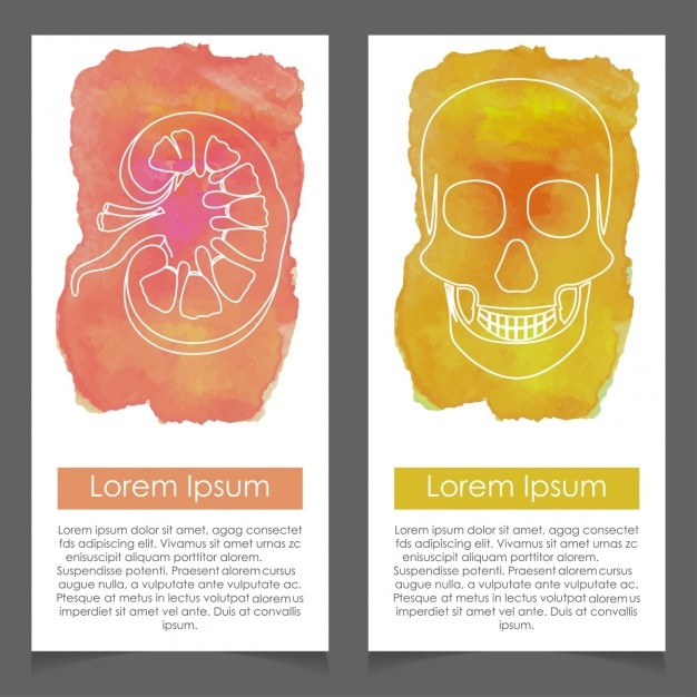 Banners about human anatomy, kidney and skull Free Vector