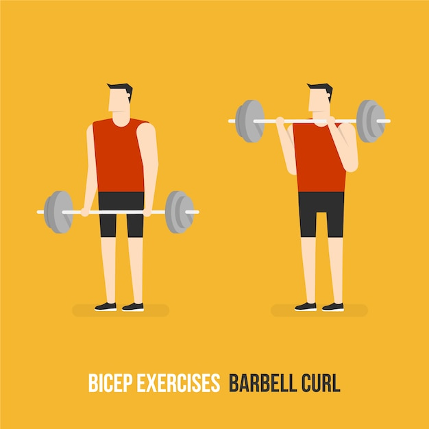 Barbell curl demostration Free Vector
