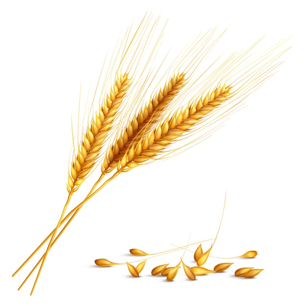 Иллюстрация зерна ячменя Бесплатные векторы
