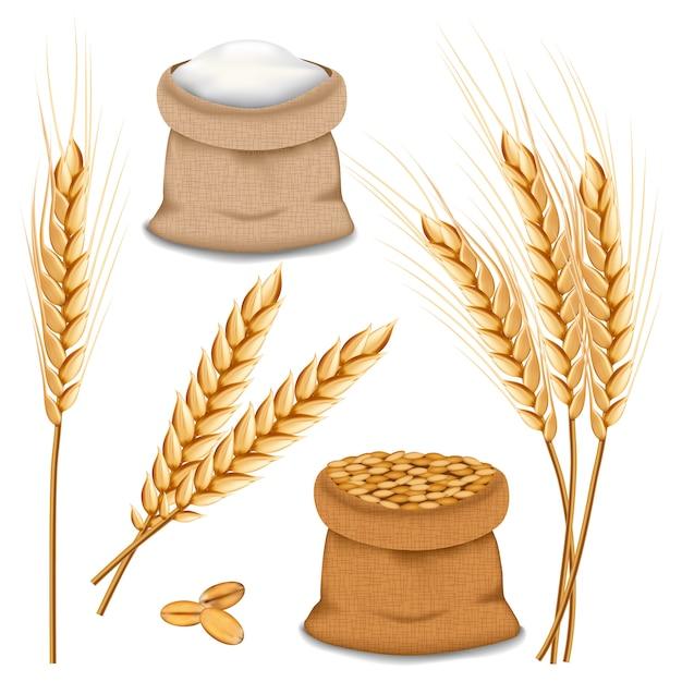 Barley spikelets mockup set Premium Vector