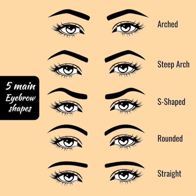 Basic eyebrow shape types vector illustration | Premium Vector