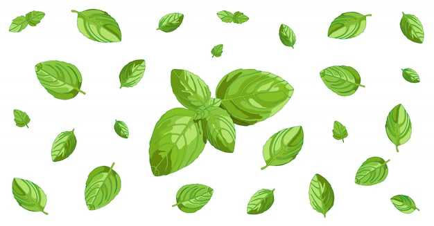 Basil Leaves Horizontal Background Design Premium Vector