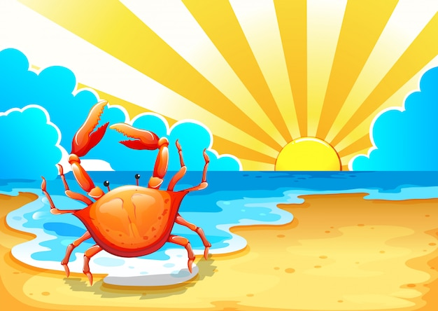 A beach with a crab Free Vector