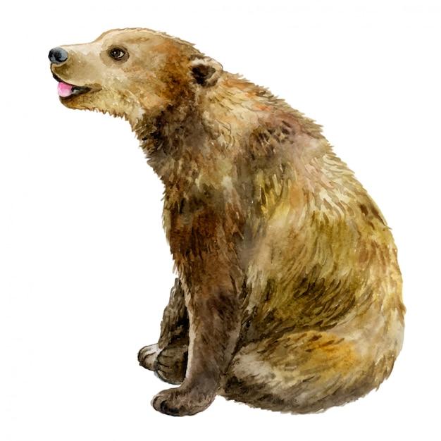 Медведь в акварели Premium векторы