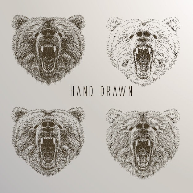 Bear's head hand drawn collection Free Vector
