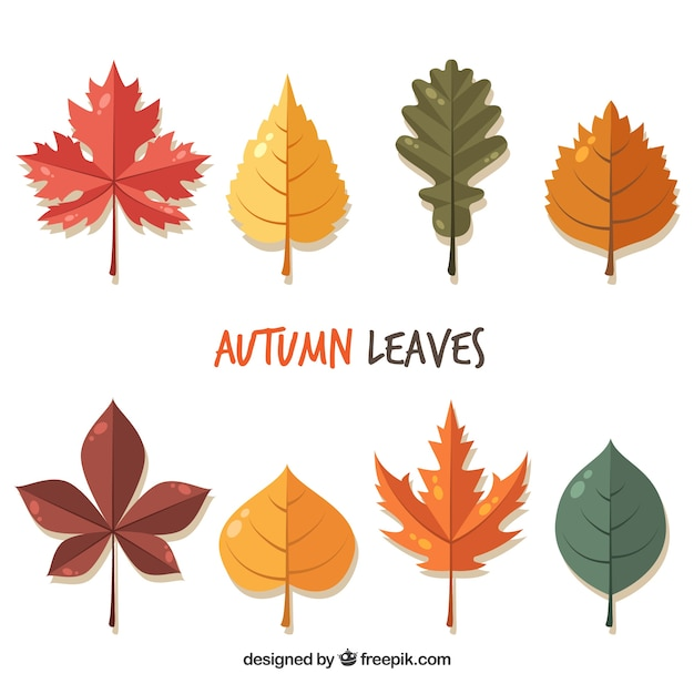 Beautiful Autumn Leaves In Flat Style Vector Free Download