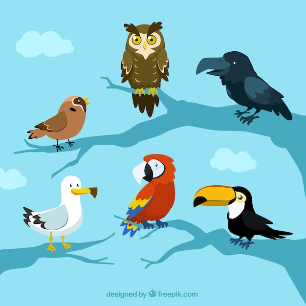 Free Vector Beautiful Birds Collection