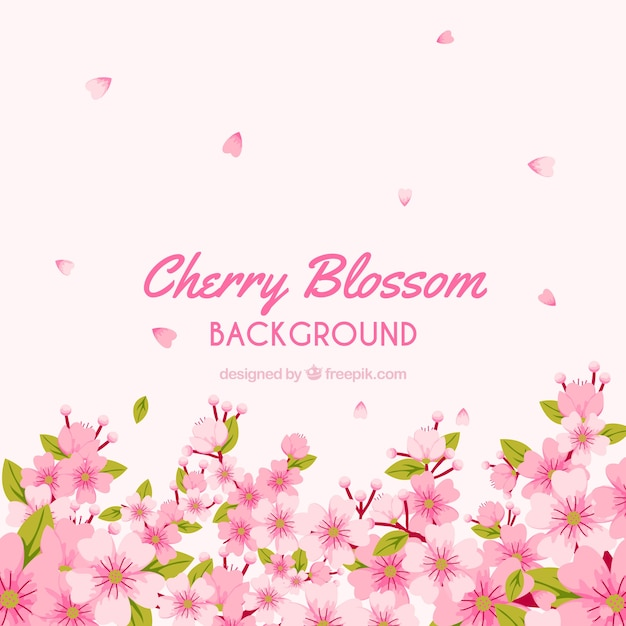 Beautiful cherry blossom background design Free Vector
