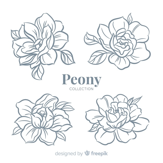 Beautiful collection of peony flowers in hand drawn style Free Vector